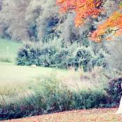 Bildschöne Herbsthochzeit von Lisa Hafeneger