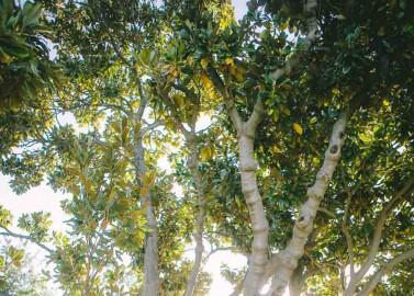 Australische vintage Parkhochzeit von Linse 2 Fotografie