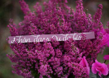 Wein- und Rosarote Herbststimmung
