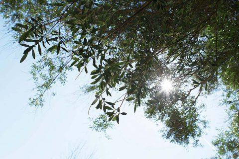 Frühlingserwachen auf Mallorca