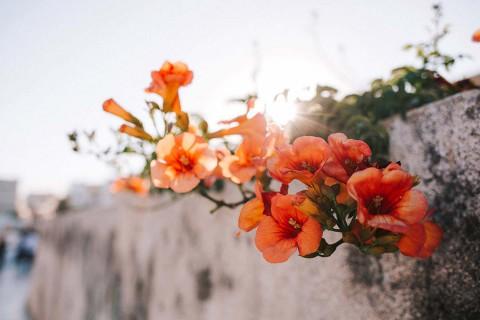 Love, Laugh & Santorini