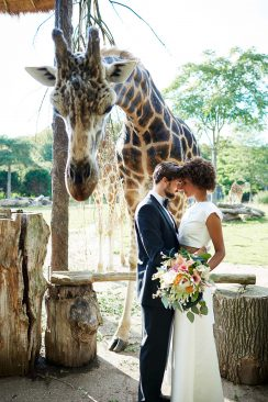 Jungle LOVE - Tropische Romantik