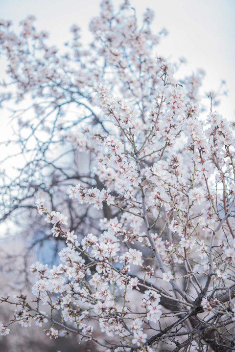 Mandelblüten-Hochzeitsromantik in Andalusien