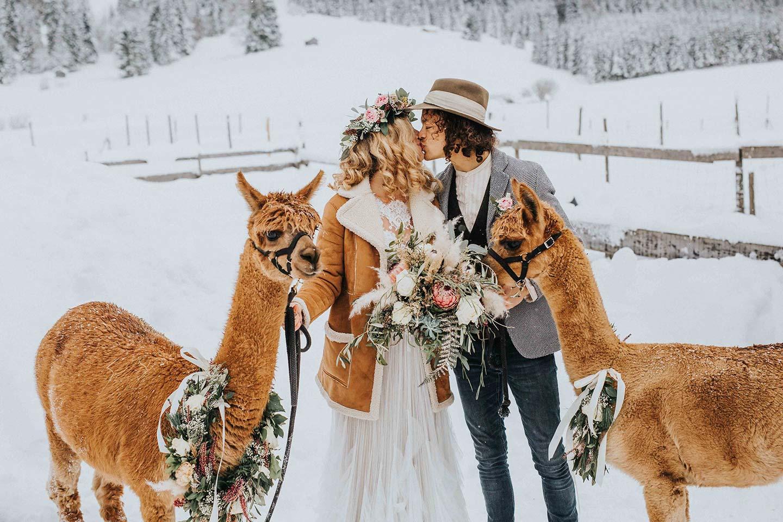 Alpakas und ein Boho-Wintermärchen