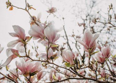 Trachtenhochzeitsinspiration unterm Apfelbaum