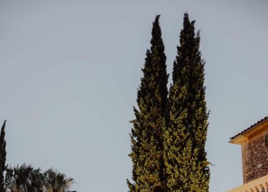 Finca Son Mir: Traumhochzeit unter der spanischen Sonne