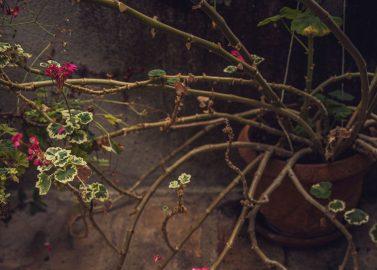 Von Singapur zur Hochzeit in der Alten Gärtnerei