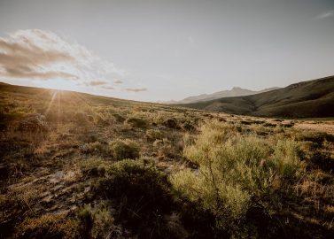 Safari Wedding - Traumhochzeit in Südafrika