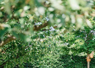 Sommerhochzeit im Reitstall auf dem Hof Kranenkamp